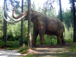Mastodons while looking much like an elephant were different in