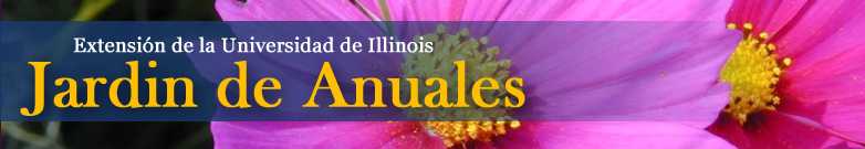 Rotating  Flower images for Annuals site