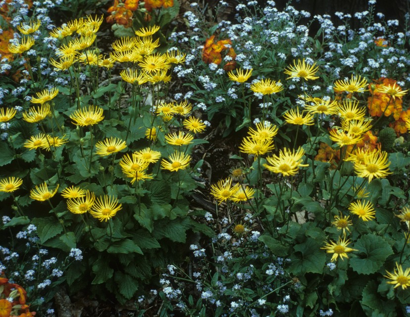 Perennials tolerant of moist to wet soil beyond impatiens and leopards bane mightylinksfo Gallery