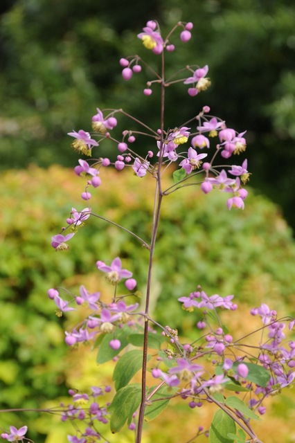 Perennials Tolerant of Moist to Wet Soil | Beyond Impatiens and