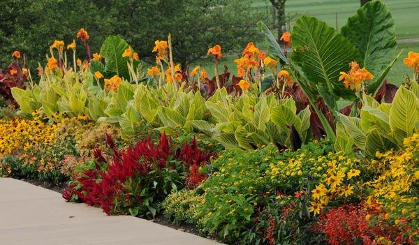 Aspectos a tener en cuenta para saber qu plantar en cada - Plantas que aguantan mucho sol y calor ...