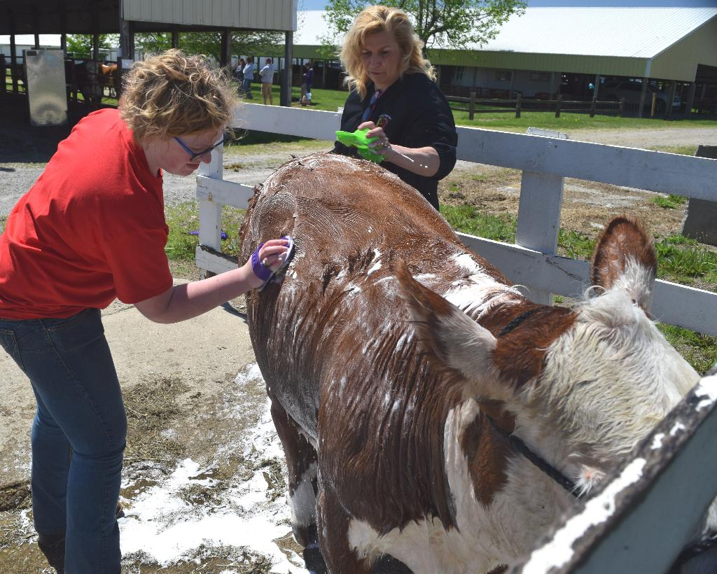 Learning proper items to use when washing your cattle