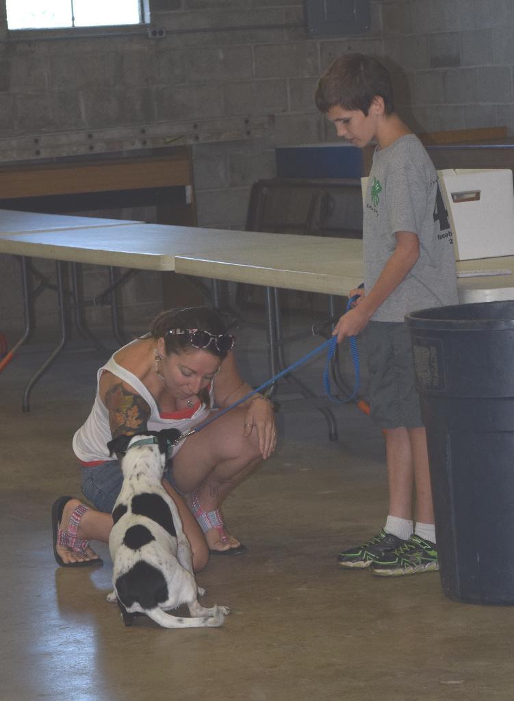 Dog care judging