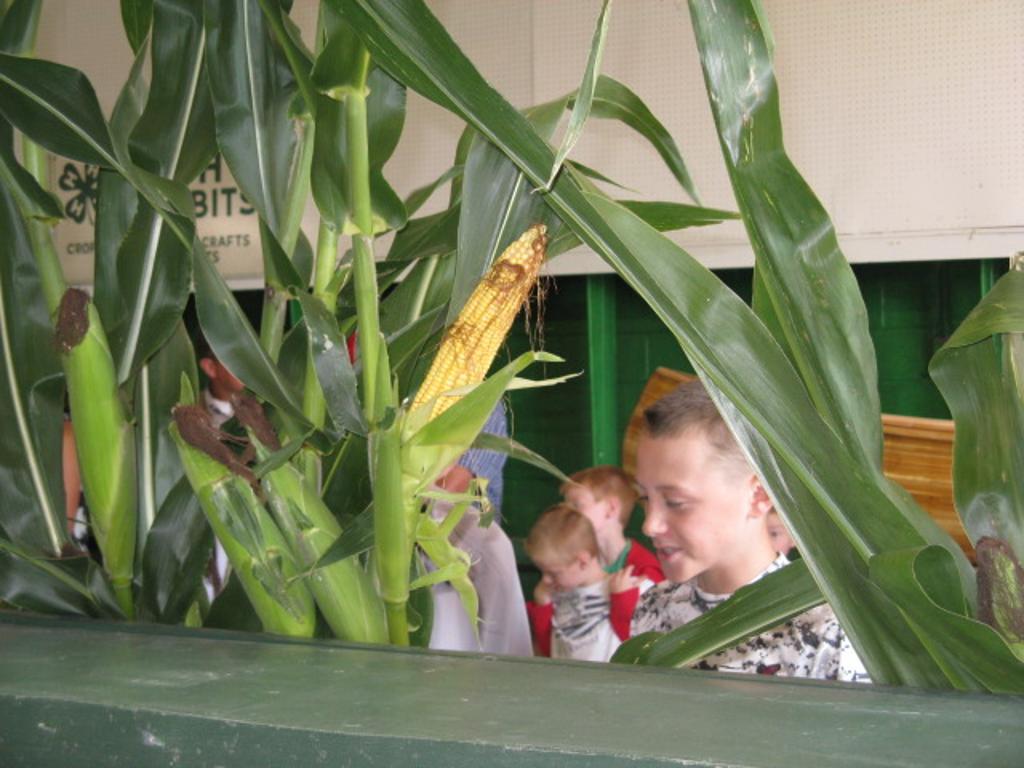 More crops judging