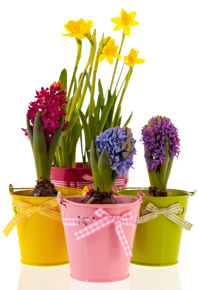 Both Spring And Summer Bulbs Can Be Planted In Portable Containers