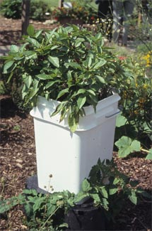 Types Of Containers Making Herb And Vegetable Containers