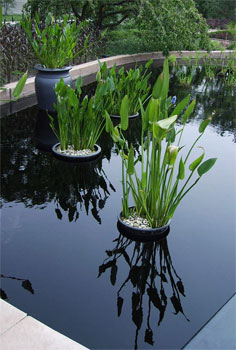 Constructing and Caring for Container Water Gardens Successful