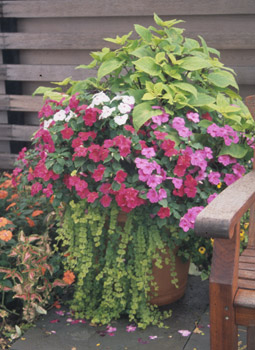 A Large Patio Container Photo