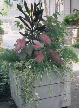 Subtle Foliage Color Planter Photo