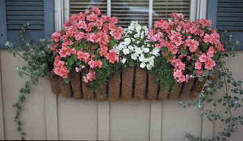 Window Box of Color Photo