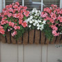 Window Box of Color