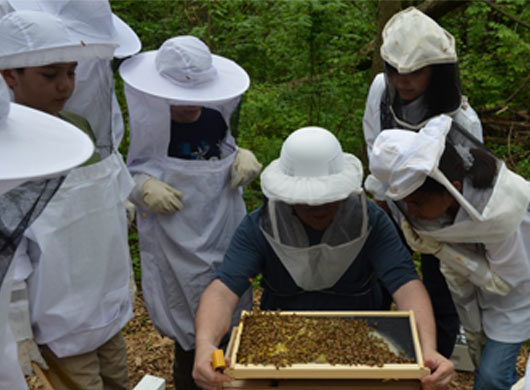 4-H Youth Learn the Importance of Bees