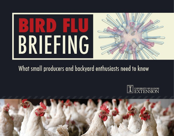 U of I Extension bird flu resources for small producers, backyard enthusiasts