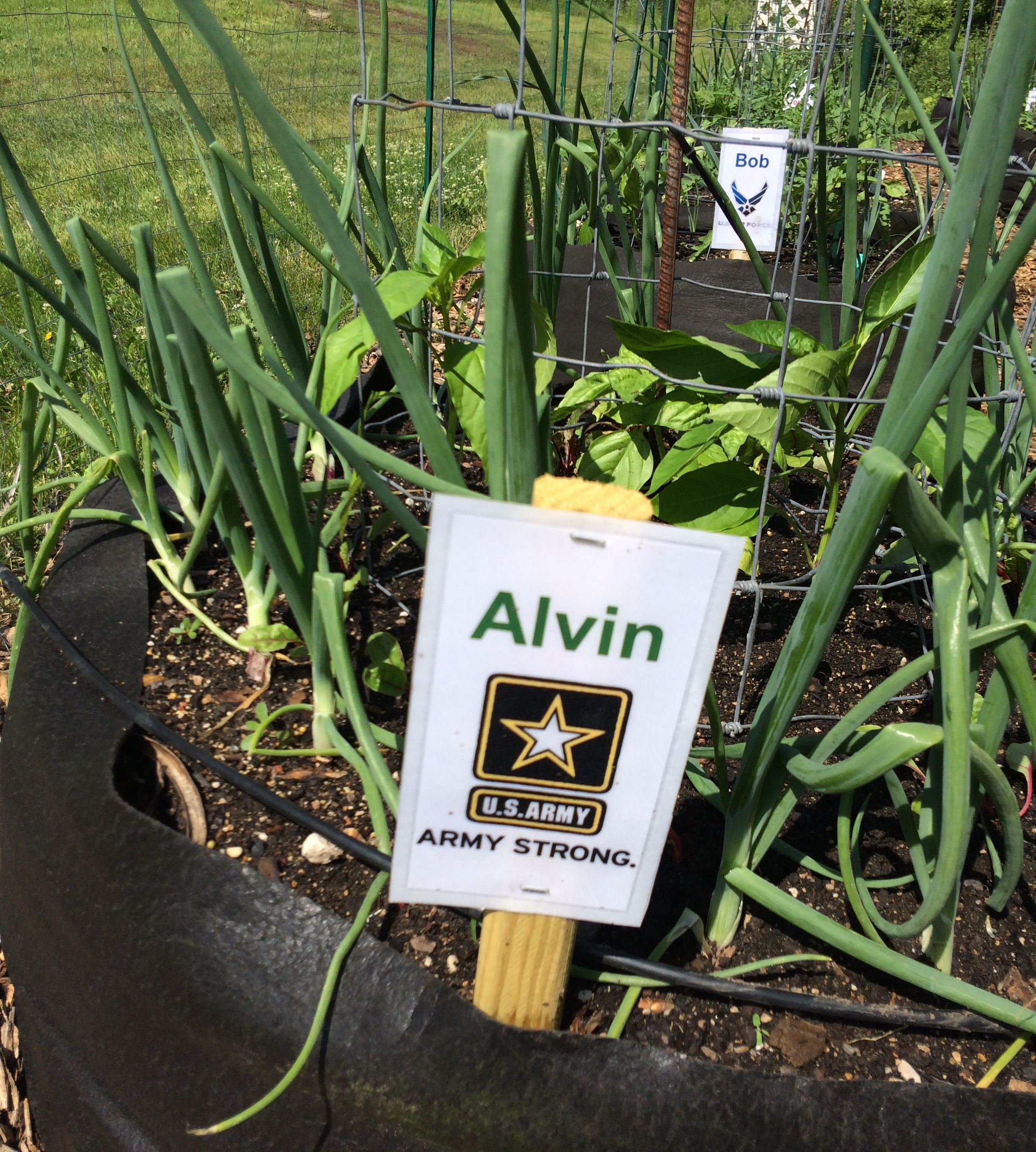 New Veterans' Garden Grows Connections, Harvests Success