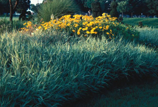 Maintenance of ornamental grasses ornamental grasses university photo of grasses workwithnaturefo