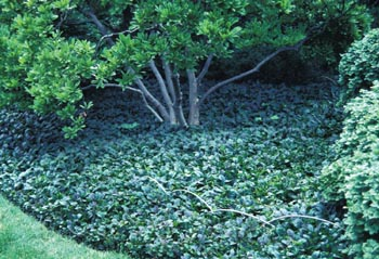 Tips To Consider When Adding Groundcovers Your Landscape
