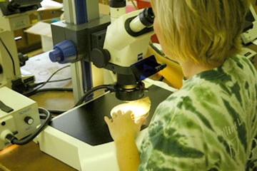 A person examining a sample with a microscope