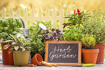 An Herb Garden In Pots