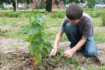 Child tending to a plant