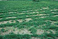 Home Lawn Fertilization Lawnfaqs University Of Illinois