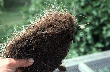 Managing Thatch In Home Lawns Lawn Talk University Of Illinois
