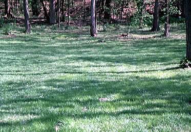 Shade lawn