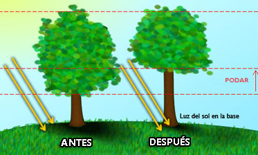 Control Del Cesped Que Crece En La Sombra Lawn Talk University - Arboles-que-dan-sombra