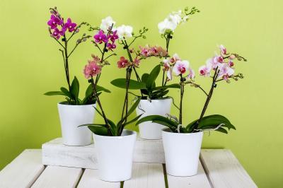 orchids-595242 1920