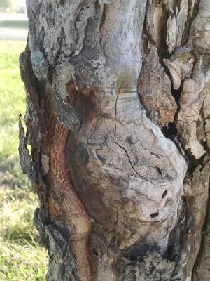 tree trunk damage