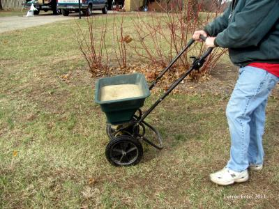 seeding lawn with push spreader