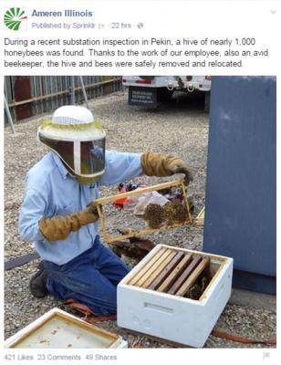 ameren bees