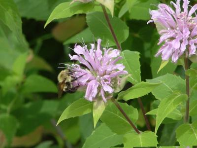 Bee Blog 3