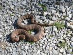 Small numbers of snakes may congregate during the breeding season in preferred basking areas or in hibernating sites during winter. Photo courtesy of Doug Mills.
