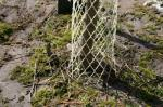 Fencing can protect young trees from being damaged by rabbits, voles, and deer.