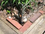 A chipmunk (<i>Tamias striatus</i>) has dug a burrow in this flowerbed. Note the burrow entrance at the bottom of the photo where the bricks make an angle. Photo courtesy of Dan Ludwig, Illinois Department of Natural Resources.