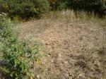 Vegetation damaged by feral hogs rooting. Photo courtesy of Ron Horwedel.