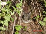 """<p><a href=""""directory_show.cfm?species=cottontail"""">Continue to Wildlife Directory</a></p>"""