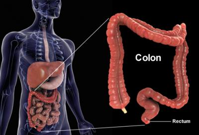 getty rm photo of colon composite