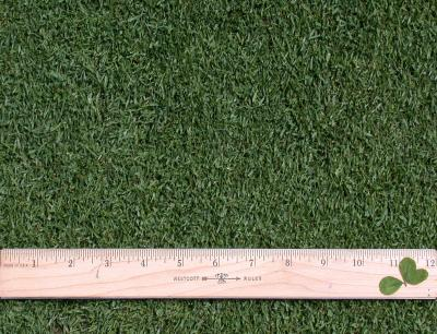 "Creeping bentgrass (Agrostis palustris) - fairway height (1/2"")"
