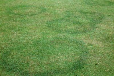 Fairy ring with dark green grass only.