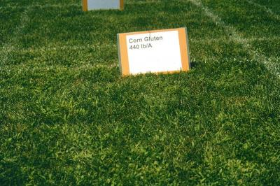 At this Purdue University research trial, corn gluten meal was applied at 20 lbs of product per 1000 square feet. The bright green grass is crabgrass that was not controlled.