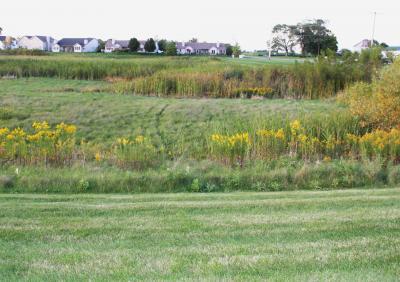 Detention pond with emergent weeds.