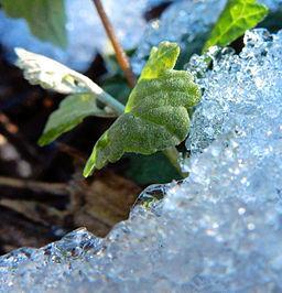 Arizona-melting-snow-plant-snd