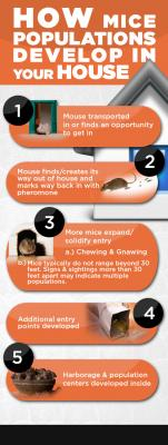 How Mouse Populations Develop in your House-Full1