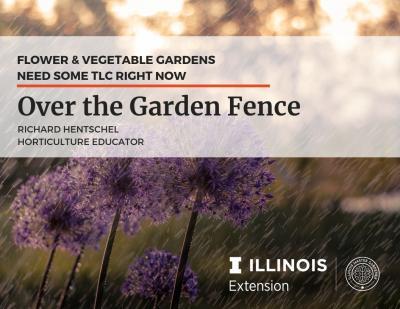 Over the Garden Fence - TLC gardens