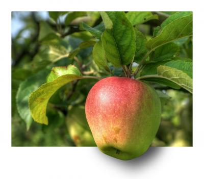apple-191004 1280