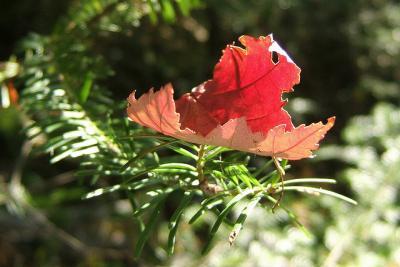 fall winter tree