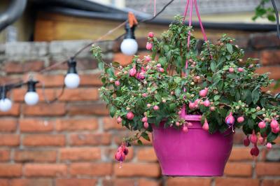 flowerpot-1722456 1920  2