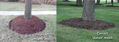 good bad mulch