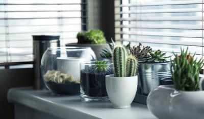 pots-716579 1920
